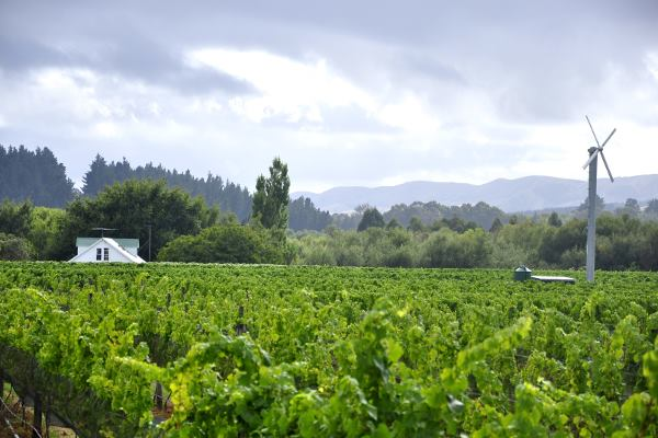 Lush green vineyard with windmill in New Zealand